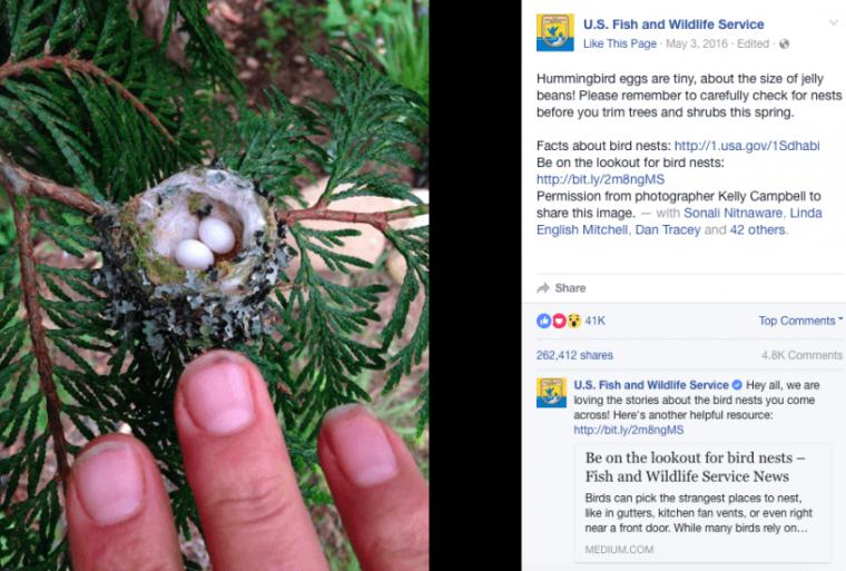 hummingbird nest social media post
