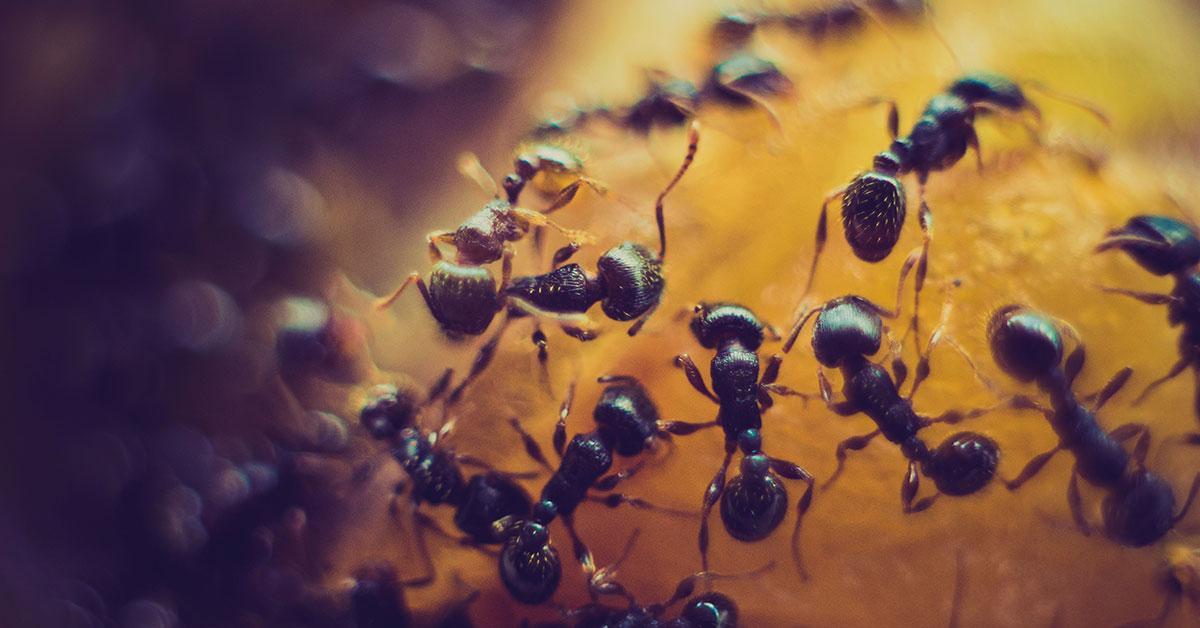ants on an orange fruit
