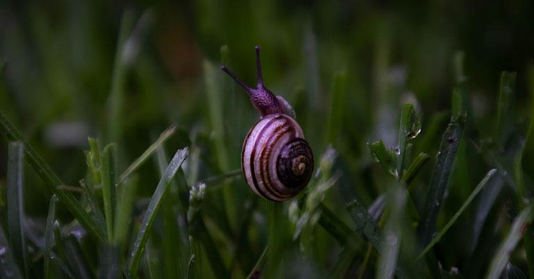 snail crawling through grass