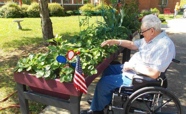 older man in a wheelchair gardening